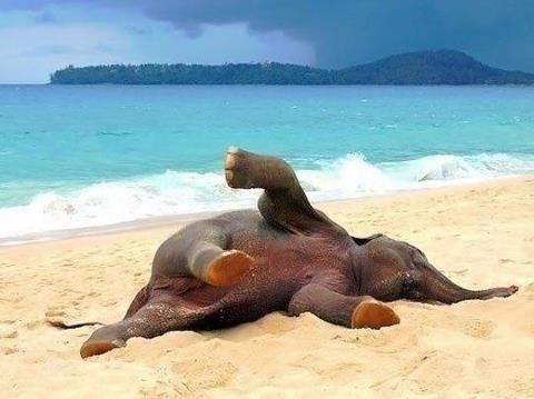 felicidad_elefante